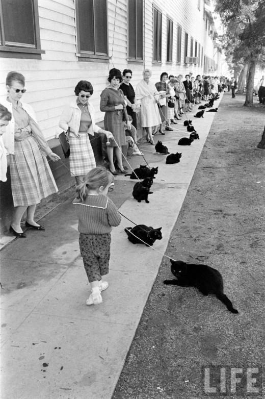 casting gatos